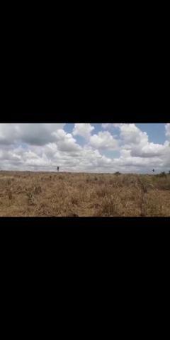 Fazenda para soja - Foto 2