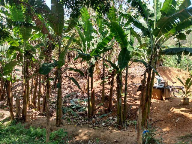 Sítio com 22.000 m2 plantação de banana e outros frutos - Foto 4
