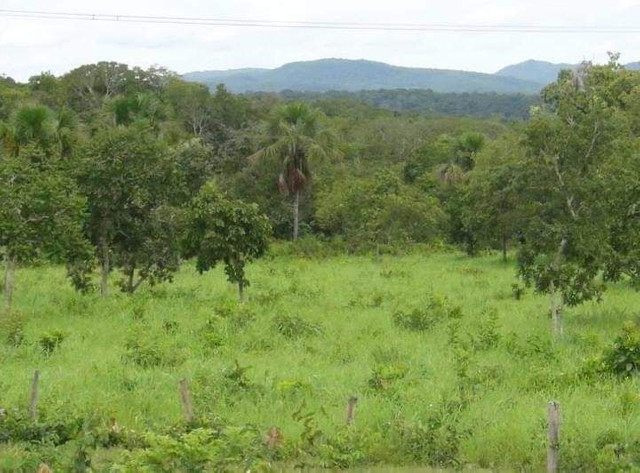 Compra de terra; sítios, chácara e fazenda. - Foto 3