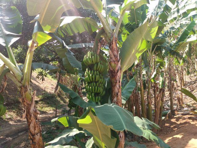 Sítio com 22.000 m2 plantação de banana e outros frutos
