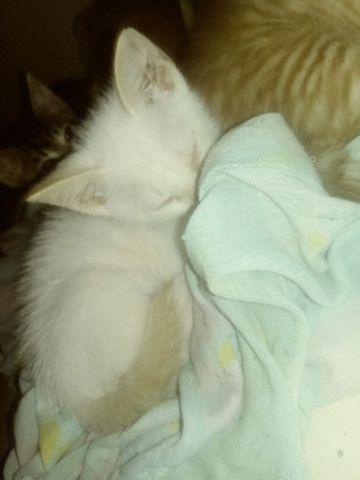 Gatos - Foto 5