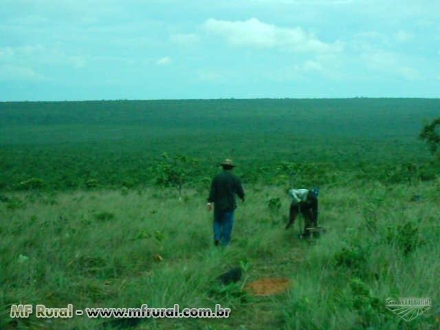Linda Fazenda em Mato Grosso - em Conquista D´oeste - MT - Foto 7