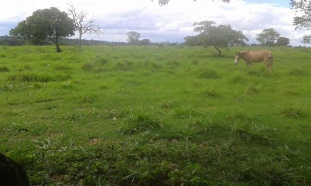 8271   fazenda à venda em pontal do araguaia - Foto 8
