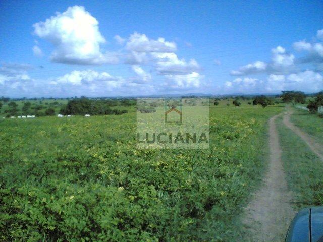 Fazenda com 467 hectares em Limoeiro (Cód.: 103m57) - Foto 6