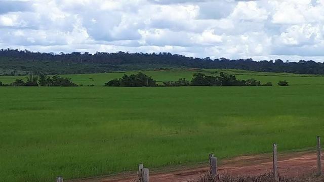 Vendo Fazenda Rondônia - Foto 7