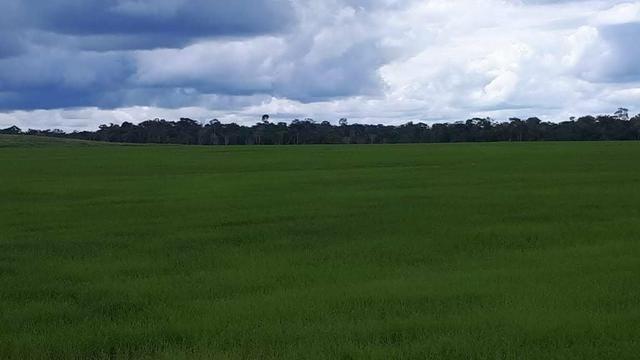 Vendo Fazenda Rondônia - Foto 14