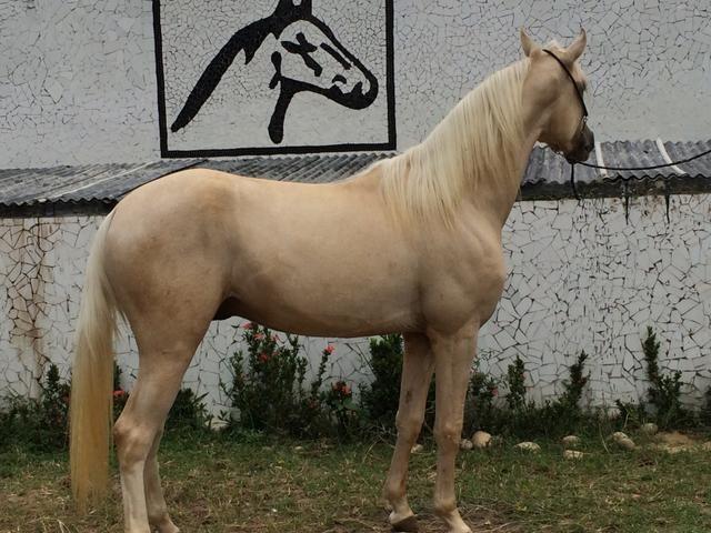 Cavalos aluguel de baias e doma racional