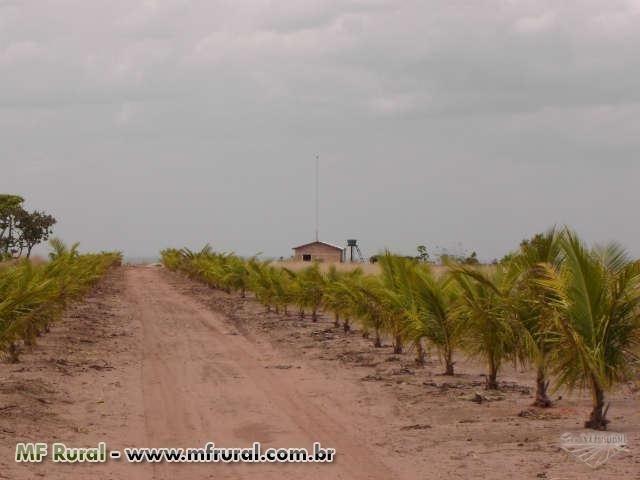 Linda Fazenda em Mato Grosso - em Conquista D´oeste - MT - Foto 3