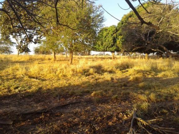 8271   fazenda à venda em pontal do araguaia - Foto 2