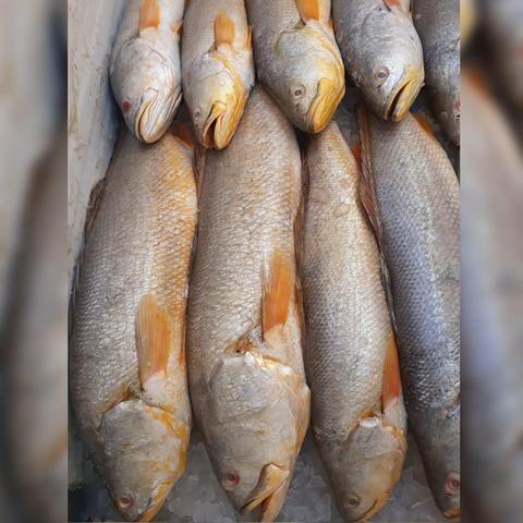 Pescados e mariscos - Foto 6