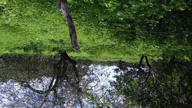 Fazenda em Itarema 386 hectares plantados de cajueiros,lagoa,poço,rio na extrema - Foto 9