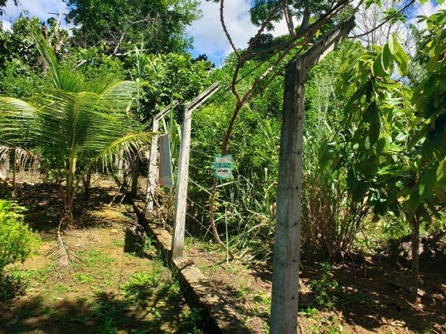 Ibirapitanga. Fazenda pequena com área de 12 ha - Foto 10