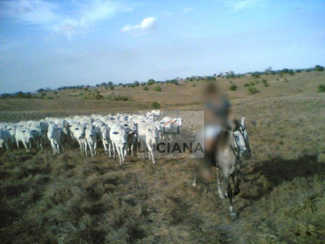 Fazenda com 467 hectares em Limoeiro (Cód.: 103m57) - Foto 5