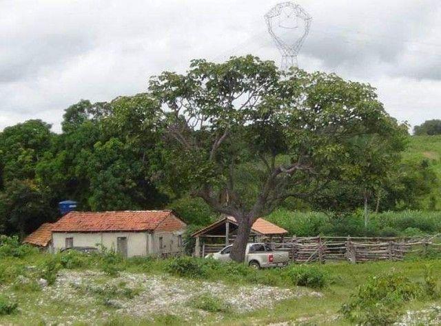 Compra de terra; sítios, chácara e fazenda. - Foto 2