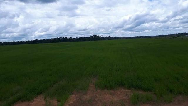 Vendo Fazenda Rondônia - Foto 15