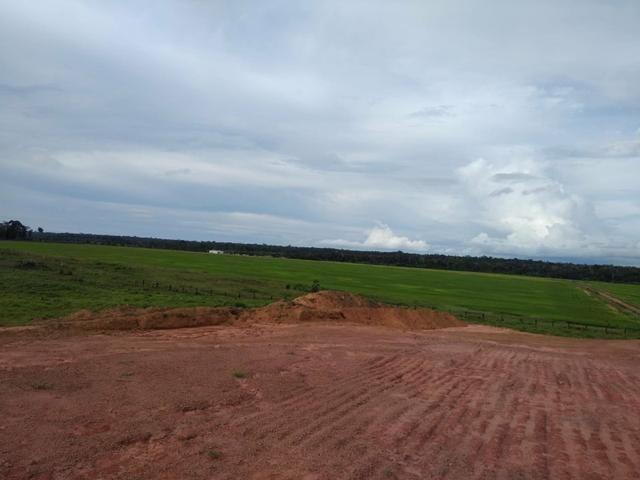 Vendo Fazenda Rondônia - Foto 6