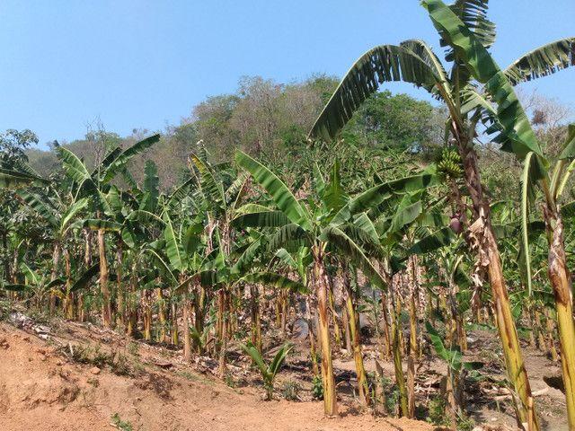 Sítio com 22.000 m2 plantação de banana e outros frutos - Foto 18