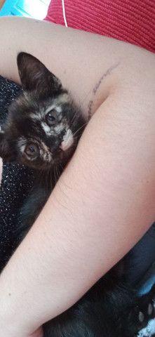 Doando filhote de gato.  - Foto 2