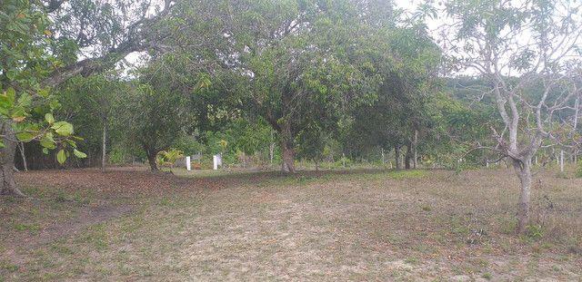 Vendo sítio,  LOT ELDORADO,  GOIANA PE,  CAMINHO de pontas de pedra . - Foto 6