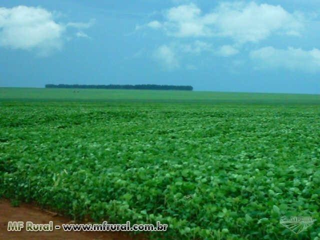 Linda Fazenda em Mato Grosso - em Conquista D´oeste - MT - Foto 5