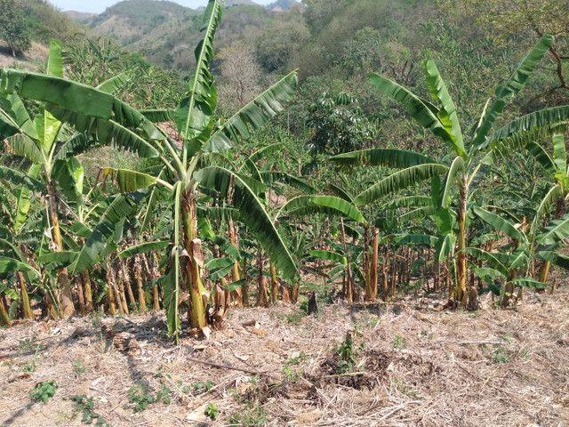 Sítio com 22.000 m2 plantação de banana e outros frutos - Foto 14