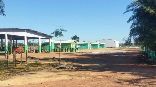 Vendo Fazenda Rondônia - Foto 16