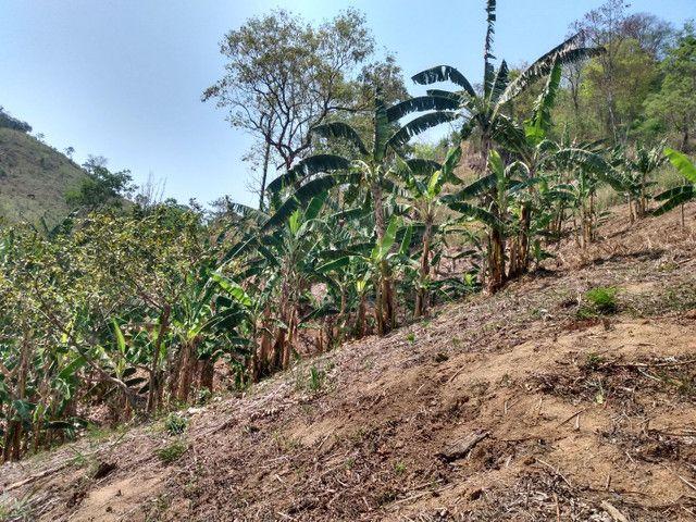Sítio com 22.000 m2 plantação de banana e outros frutos - Foto 17
