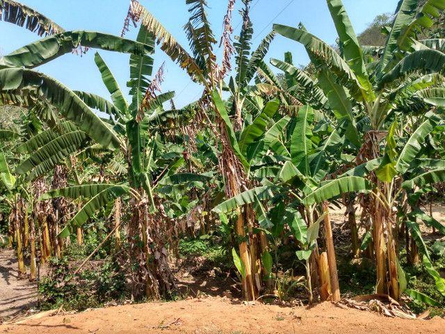 Sítio com 22.000 m2 plantação de banana e outros frutos - Foto 2
