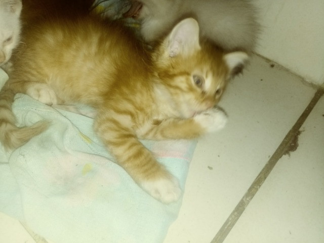 Gatos - Foto 3