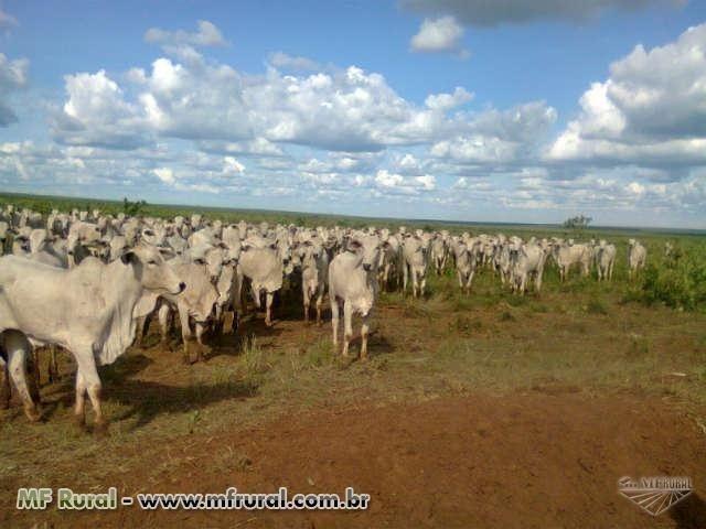 Linda Fazenda em Mato Grosso - em Conquista D´oeste - MT - Foto 8