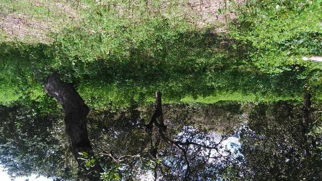 Fazenda em Itarema 386 hectares plantados de cajueiros,lagoa,poço,rio na extrema - Foto 12