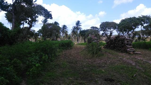 Fazenda em Itarema 386 hectares plantados de cajueiros,lagoa,poço,rio na extrema - Foto 8