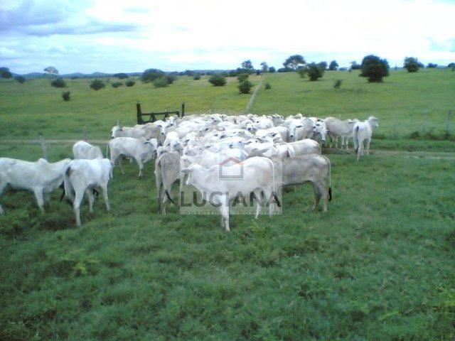Fazenda com 467 hectares em Limoeiro (Cód.: 103m57) - Foto 10