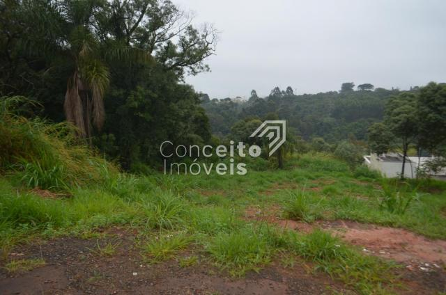 Terreno à venda em Estrela, Ponta grossa cod:391713.001 - Foto 5