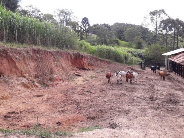 Fazenda em Redenção da serra - Foto 12