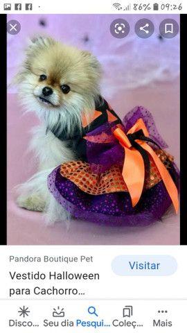 K & R Moda Pet - Foto 5
