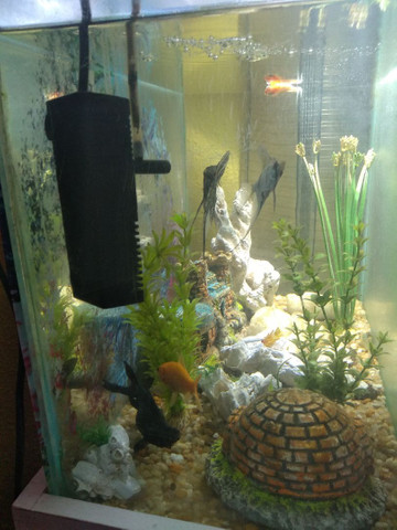 Vendo um lindo aquário completo  - Foto 5