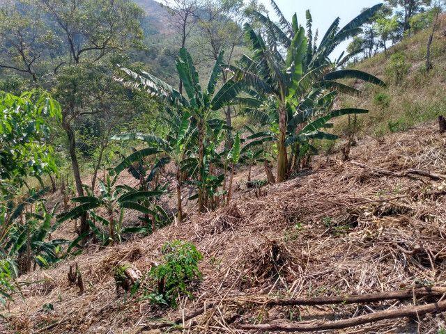 Sítio com 22.000 m2 plantação de banana e outros frutos - Foto 15