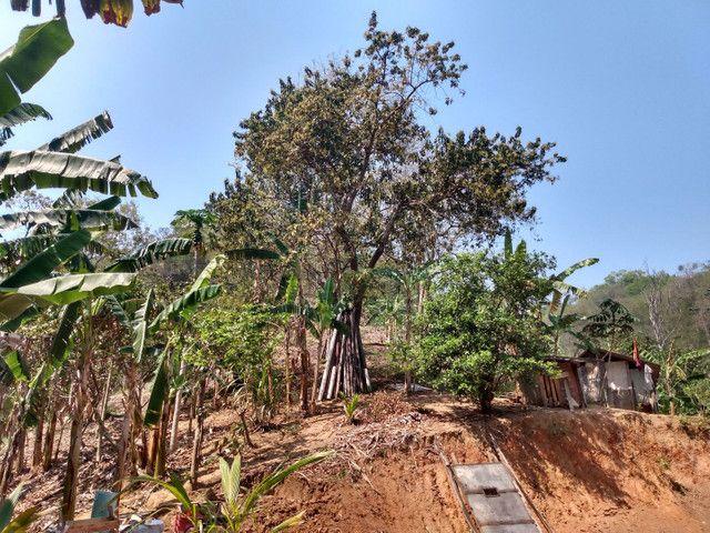 Sítio com 22.000 m2 plantação de banana e outros frutos - Foto 10