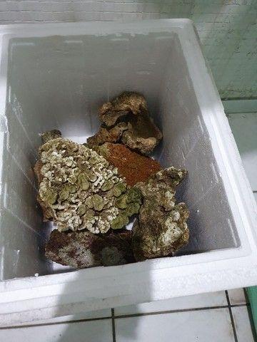 Rochas para aquário - Foto 3
