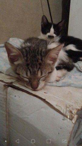 Doação filhote de gato - Foto 5