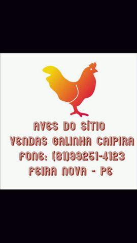 Frango caipira 20 reais a unidade - Foto 3