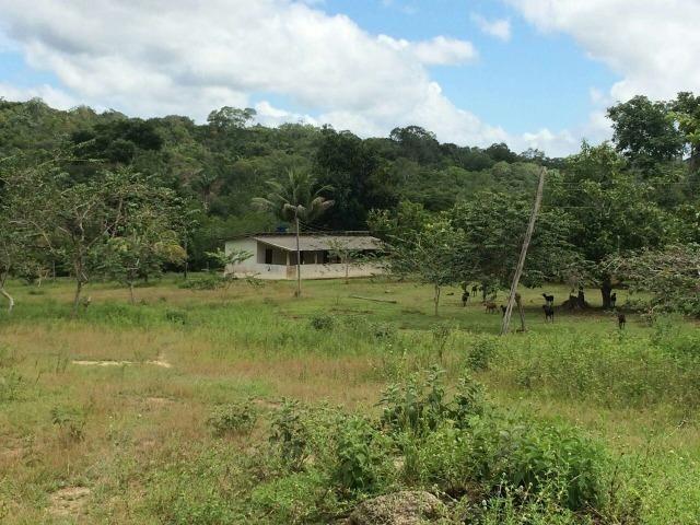 Fazenda em Presidente Figueiredo próximo cachoeira Urubui - Foto 9