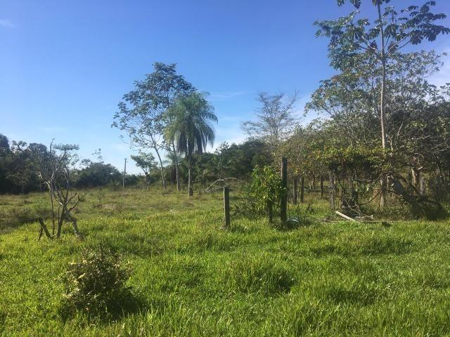 Sítio na Comunidade Carrijo à 60 Km do Trevo do Lagarto - Foto 8