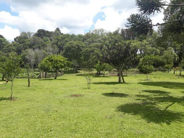 Linda Chácara 24.200 m2 ( 1 Alqueire) com 2 Casas - Palmas PR - Foto 17
