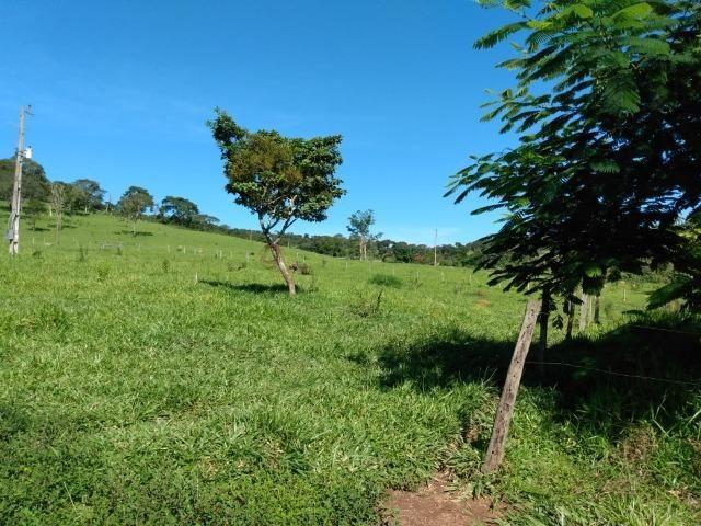 Fazenda no município de Bonfinópolis 24 alqueires - Foto 8