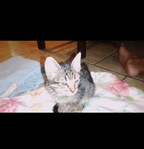 Doação filhote de gato - Foto 2