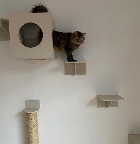 Casa brinquedo de gato - Foto 5