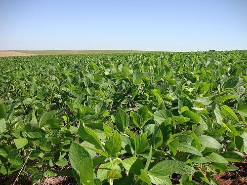 Fazenda em CENTENÁRIO - TO, p/ Soja