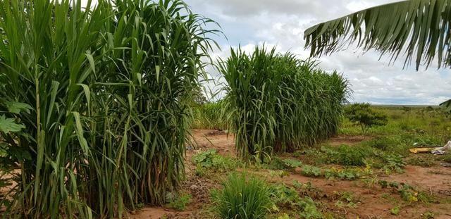Linda Fazenda em Mato Grosso - em Conquista D´oeste - MT - Foto 20